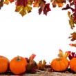 Foto Stock: Border of Assorted sizes of pumpkins on hay on white