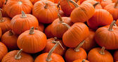 Piles of pumpkins background — Stock Photo