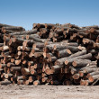 Stock Photo: Stack of freshly cut logs