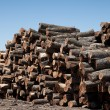 Stack of freshly cut logs — Stock Photo