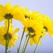 Yellow Daisies on Blue Sky — Stock Photo