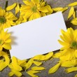 Stock Photo: Notecard with Daises