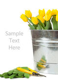 Yellow tulips in a metal pail on white — Stock Photo