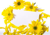 Notecard with Daises — Stock Photo
