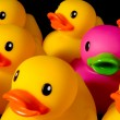 Dare to be different - rubber ducks on black — Stock Photo