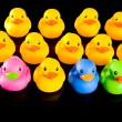 Colorful Ducks on Black — Stock Photo