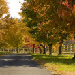 A tree lined road in the Fall — Stock Photo #13643514