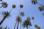 Palm Trees on Blue — Stock Photo