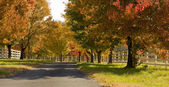 A tree lined road in the Fall — Stock Photo