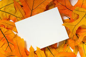 Blank card with fall leaves — Stock Photo