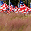 Stock Photo: AmericFlag Display in honor of Veterans Day