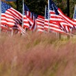 American Flag Display in honor of Veterans Day — Stock Photo