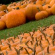 Autumn Decoration - pumpkin patch — Stock Photo