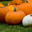 Stock Photo: Autumn Decoration - pumpkin patch