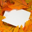 Stock Photo: Autumn Notecard