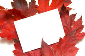 Fall Leaf Note-Card — Stock Photo