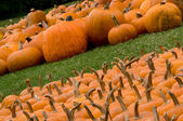 Autumn Decoration - pumpkin patch — Stock Photo