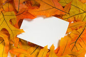 Autumn Notecard — Stock Photo