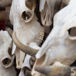 Group of bull skulls as a background — Stock Photo