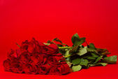 Dozen red roses on a red background — Stock Photo