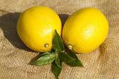 свежие лимоны — Стоковое фото