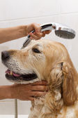 Bathroom to a dog — Stock Photo