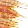 Prawns — Stock Photo