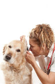 Veterinary — Stock Photo