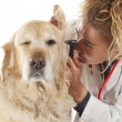 Veterinary — Stock Photo #21290973