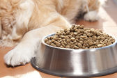Dog with his food — Stock Photo