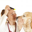 Royalty-Free Stock Photo: Veterinary consultation