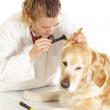 Veterinary consultation — Stock Photo #22837800
