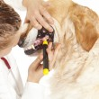 Veterinary — Stock Photo #22838016