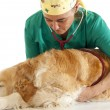 Veterinary consultation — Stock Photo
