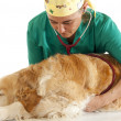 Veterinary consultation — Foto Stock #23915987