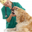 Veterinary consultation — Foto Stock #23923943