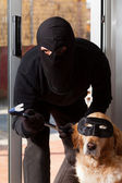 Thief stealing his accomplice — Stock Photo