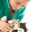 Veterinary with kitten — Stock Photo