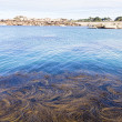 Stock Photo: Algae in the sea. Tregastel, France, Granite Coast