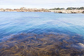 Algae in the sea. Tregastel, France, Granite Coast — Stock Photo