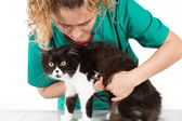 Veterinary with kitten — 图库照片