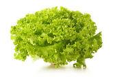 Groene bladeren sla geïsoleerd op witte achtergrond — Stockfoto