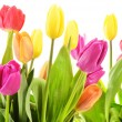 Bouquet of tulips on white background. Tulipa — Stock Photo
