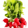 Bunch of radish isolated on white background — Stock Photo