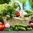 Fresh organic vegetables in wicker basket in the garden — Stock Photo #27323351