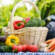 Assorted vegetables in wicker basket in the garden — Stock Photo #27871679