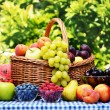 Stock Photo: Basket of fresh organic fruits in the garden