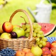 Basket of fresh organic fruits in the garden — Foto Stock
