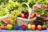 Basket of fresh organic fruits in the garden — Stock Photo