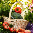 Fresh organic vegetables in garden — Stock Photo #29871057